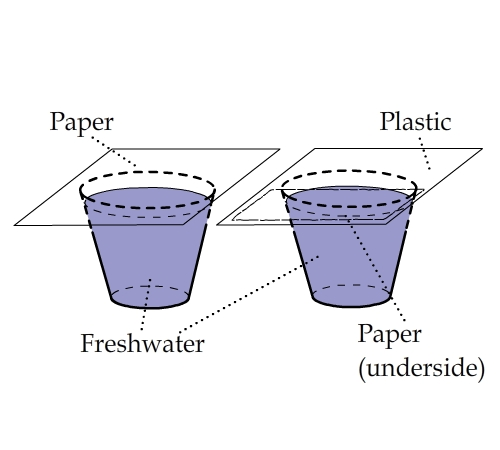 paper vs plastic bags essay Paper versus plastic: environmental disadvantages of each - paper versus plastic is a hot topic when choosing between plastic bags and paper bags get the pros and cons of paper versus plastic bags.